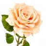 """Цветок искусственный """"Роза садовая коралловая"""" (2000-029PH)"""